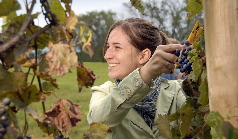 Schade Winery