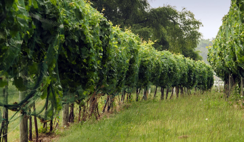 Tuckers Walk Winery