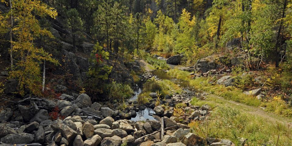 Black Hills trail