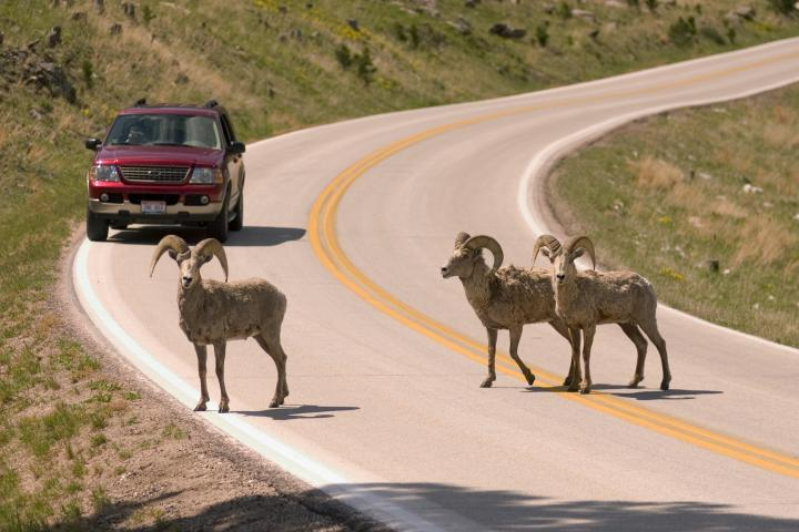 Wildlife Loop State Scenic Byway