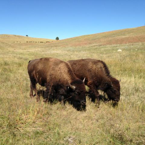 Custer state